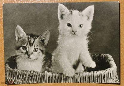 Сайт, открытки котята гдр
