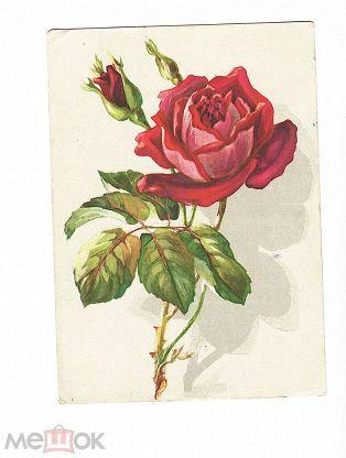 Подписанные открытки с розами, зиме для