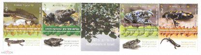 Израиль фауна земноводные лягушки тритоны саламандра 2014
