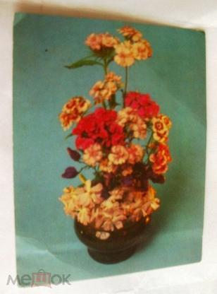 Москва букет флоксы доставка, недорогие цветов доставка алматы по низким ценам