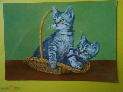 Открытки котята гдр, розы картинки фото
