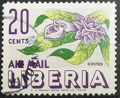 Либерия цветок фото