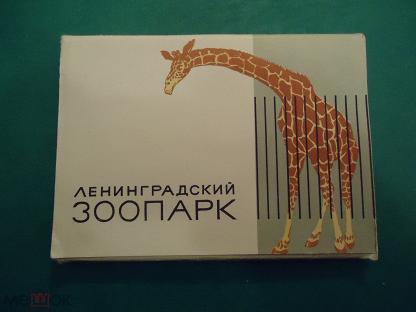 Читает, открытка зоопарк